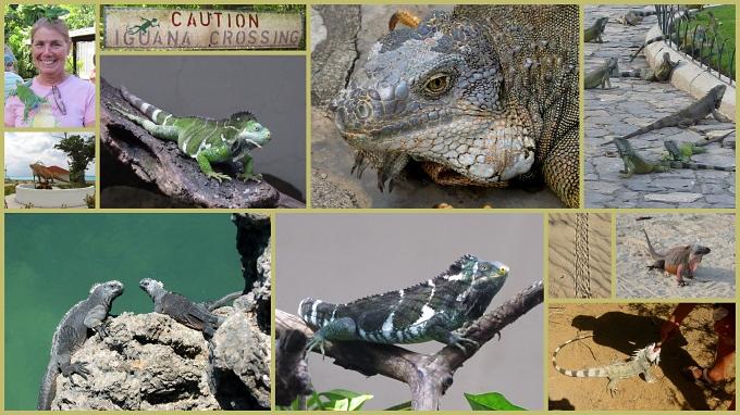 iguana collage