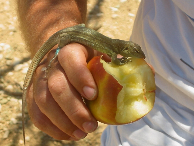 sharing an apple in bonaire