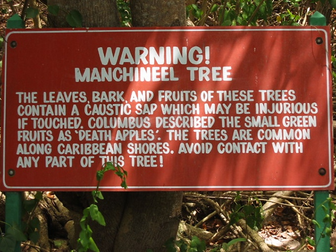 manchineel tree is poison