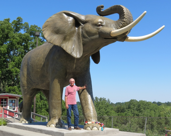 jumbo elephant in canada