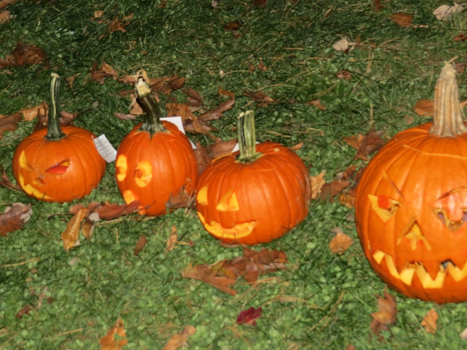 line of pumpkins