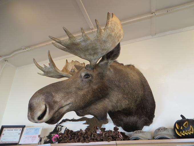 moose head at moose creek cafe