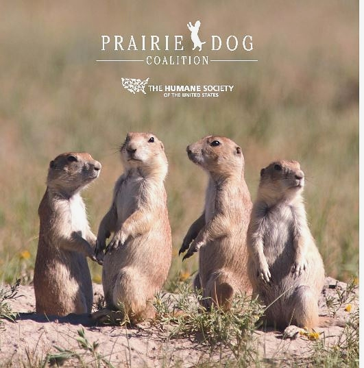 prairie dog coalition