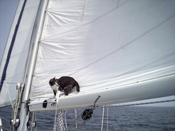 jelly in the sail