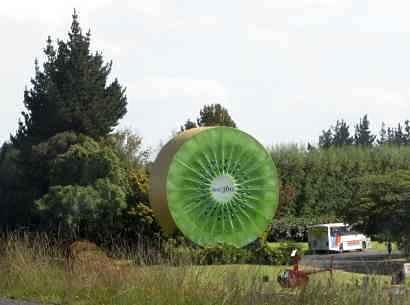 big kiwi