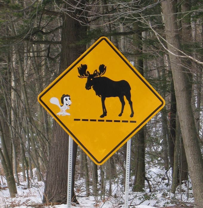 rocky and bullwinkle moose crossing sign