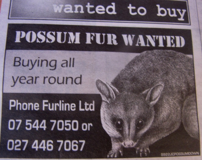 possum fur wanted ad