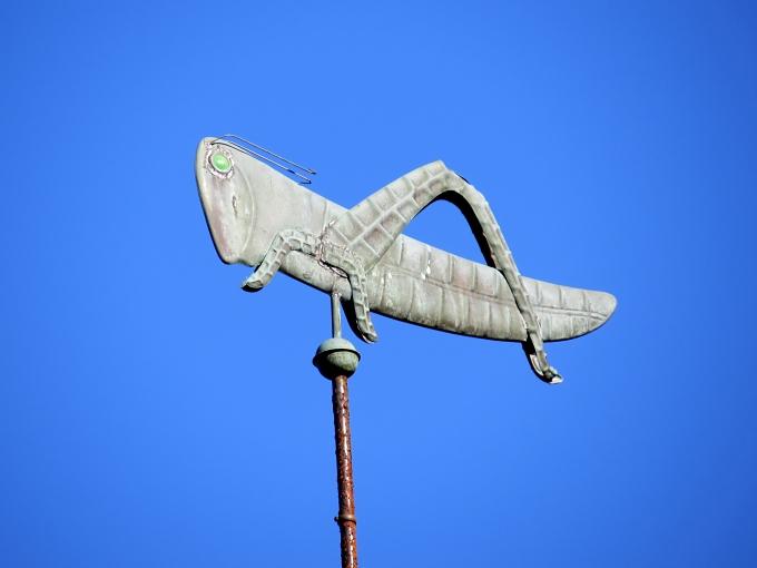 grasshopper cape cod