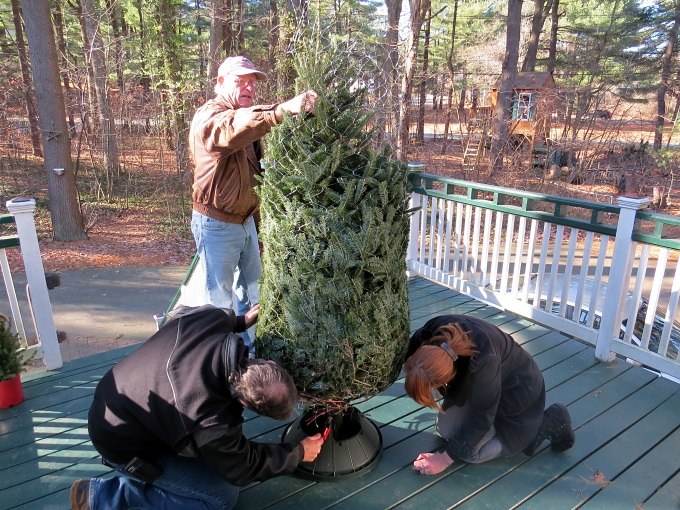 fitting the tree into the stand