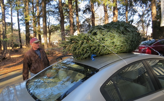 tree on top of the car