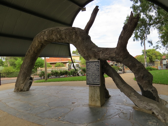 old gum tree