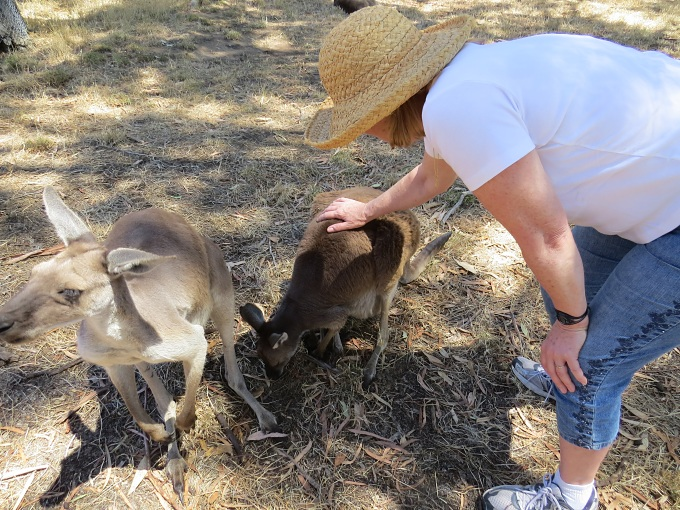 petting a roo