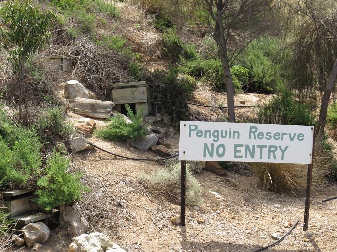 kingscote penguin reserve