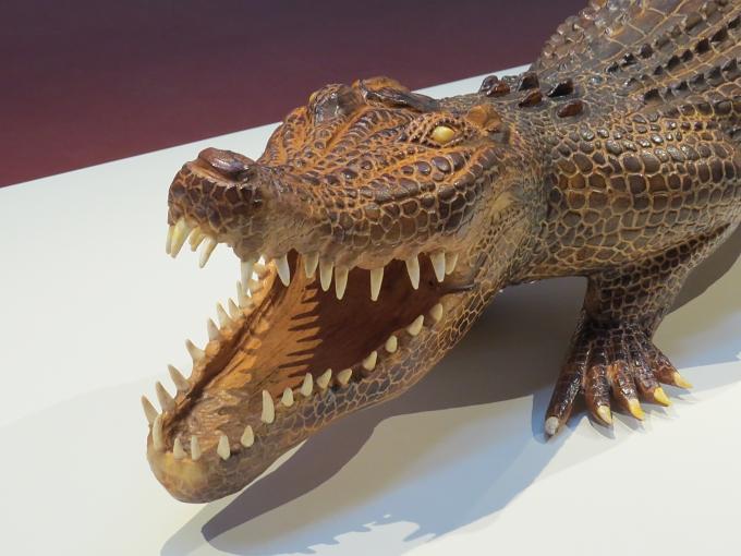 tandanya croc