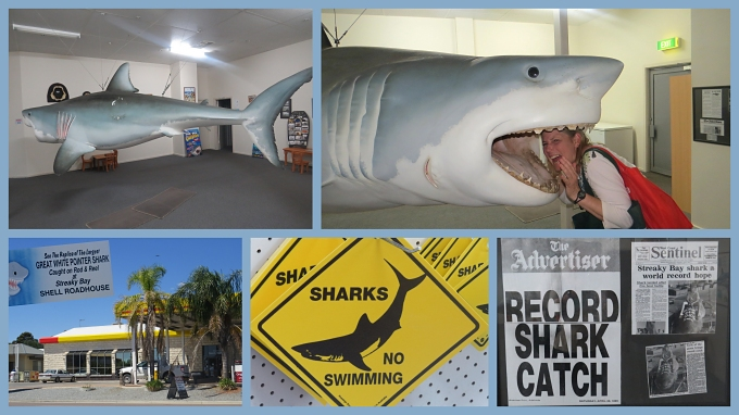 great white shark collage