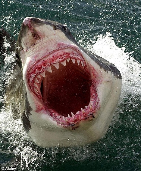 great white wow