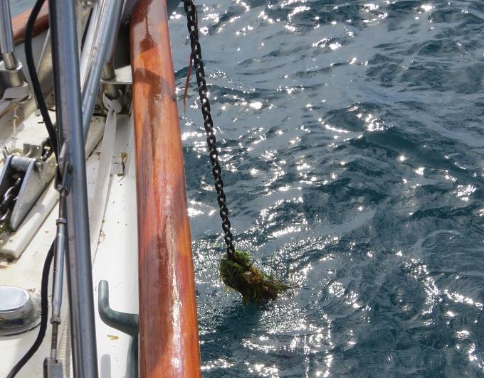 grassy anchor