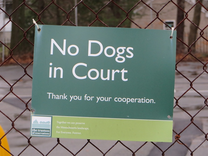 no dogs in court