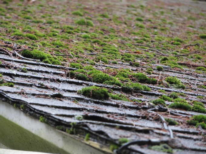 moss on the roof