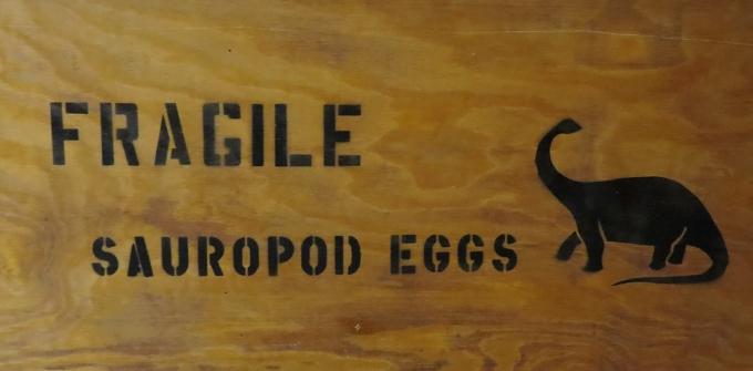 sauropod eggs