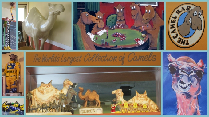 camel collage