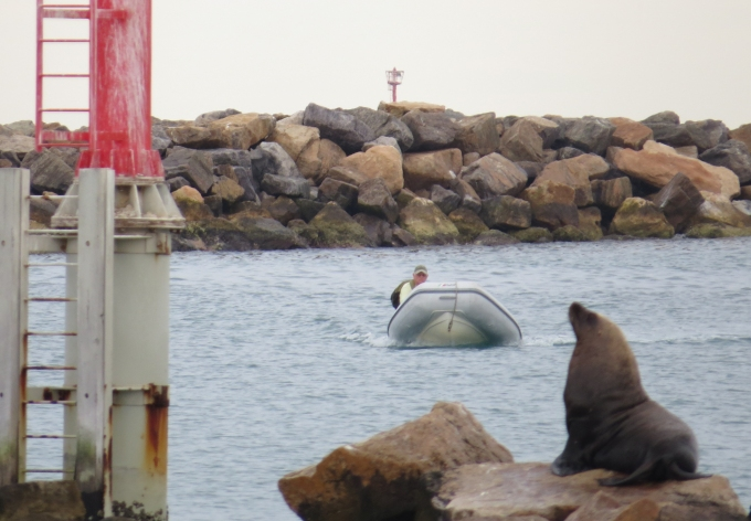 sea lion and the dinghy