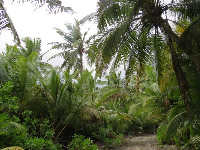 path around the island