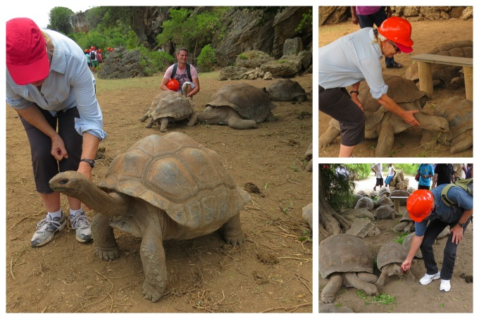 petting tortoises