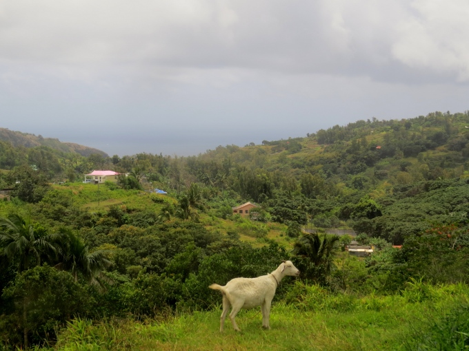 view with a goat