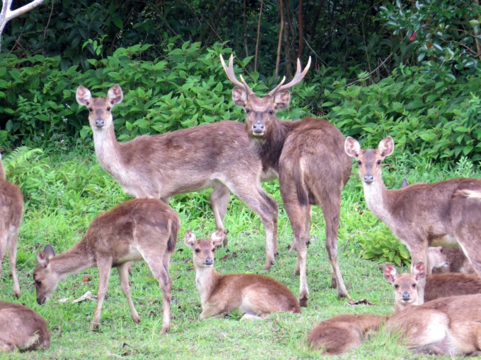 deer herd at bois cheri