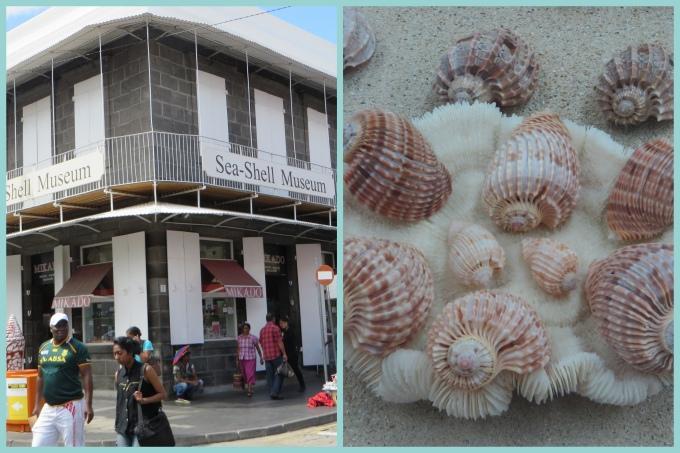 seashell museum