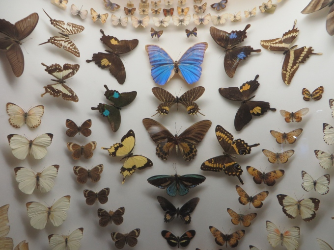 butterfly display durban south africa