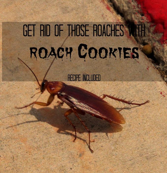 roach cookies