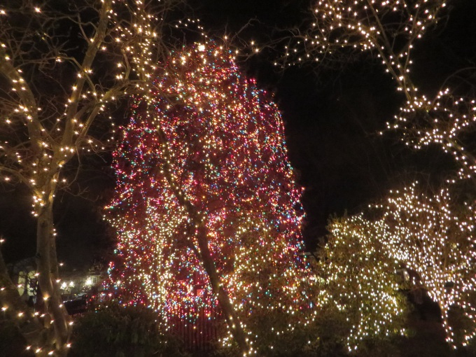princeton christmas lights