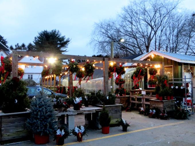christmas tree lot boston