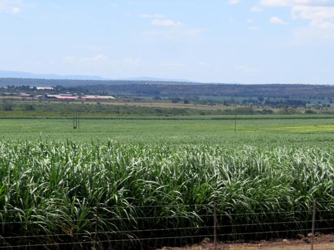 cane fields in swaziland