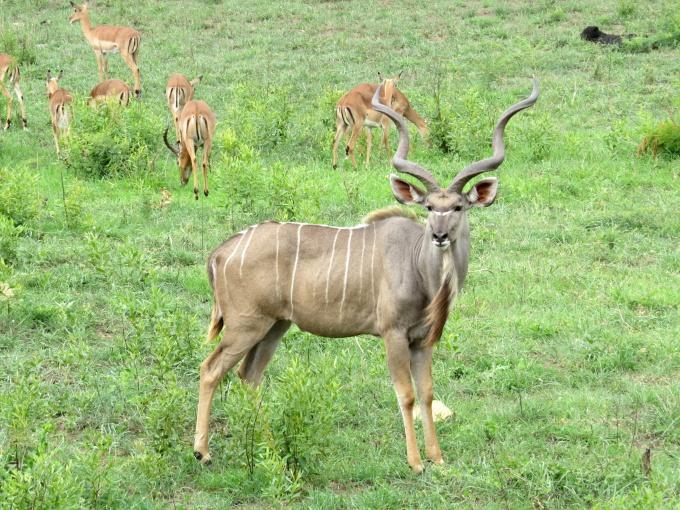 kudu bids farewell