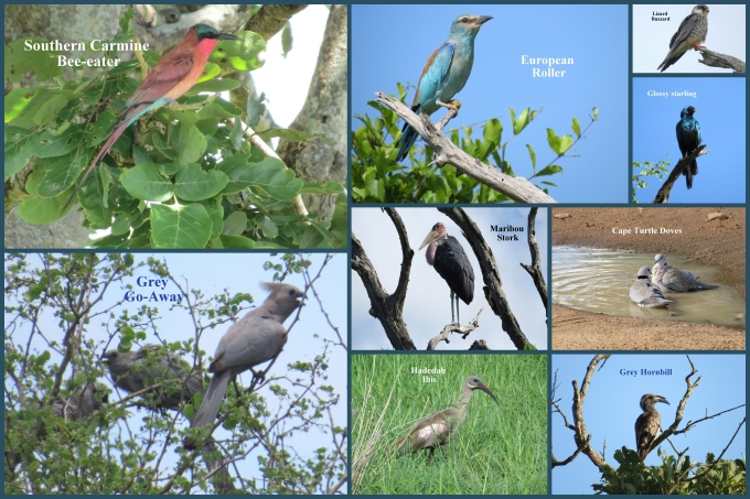 bird collage kruger np