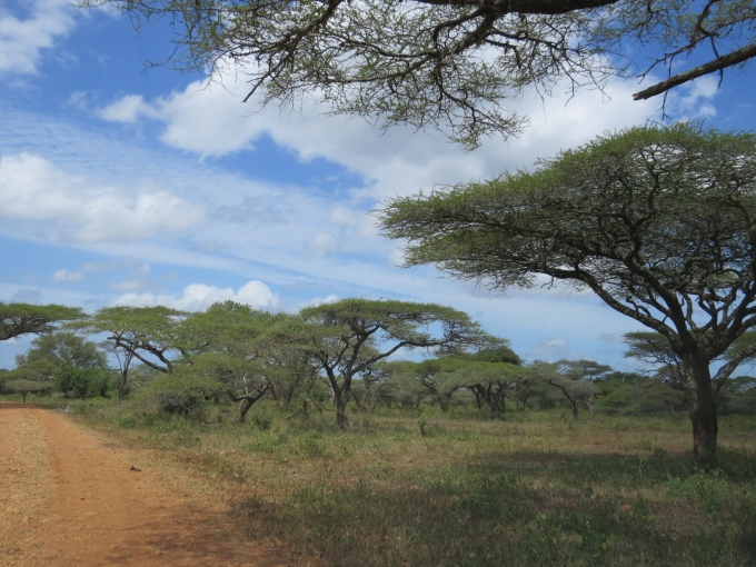 landscape at mkhuse game reserve