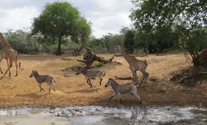spooked animals at mkhuse game reserve