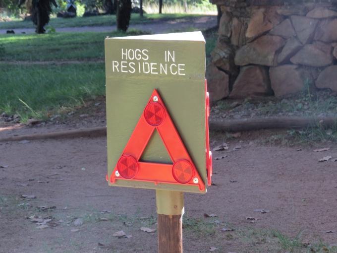 hogs in residence mlilwane wildlife sanctuary