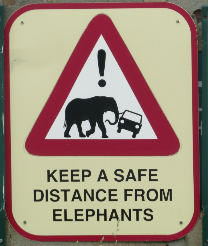 keep a safe distance from elephants at imfolozi game reserve