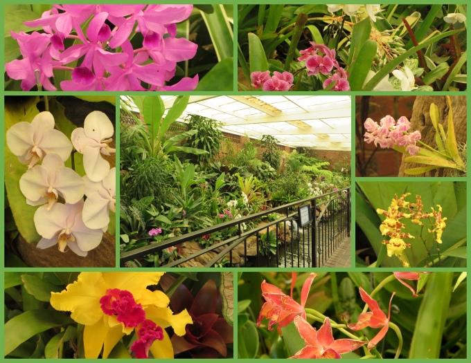 durban botanic garden orchids