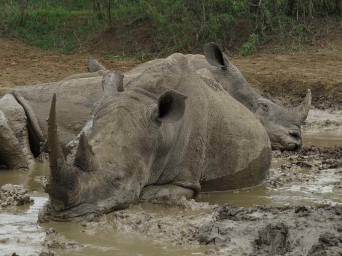 rhino mudbath