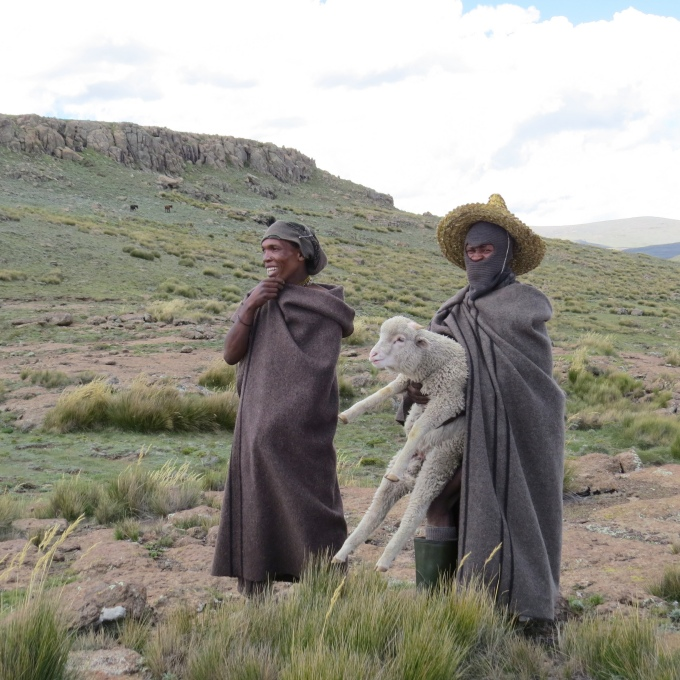 shepherds showing off sheep in lesotho