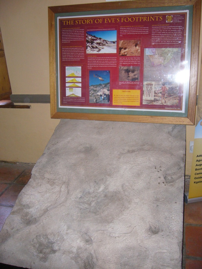 eve's footprint in south africa