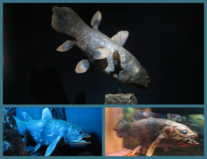 coelacanth collage