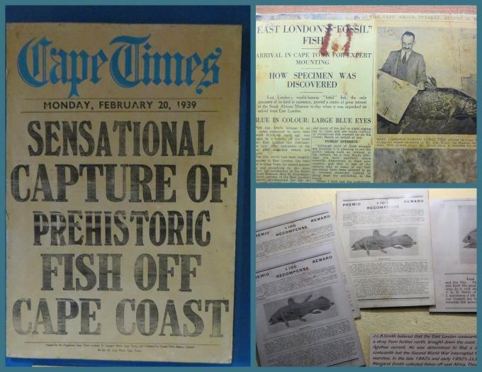 coelacanth headlines at east london museum