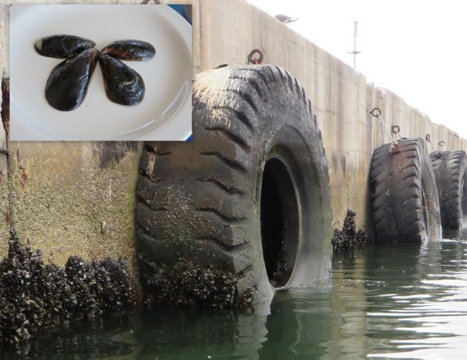 mussels in mosselbaai