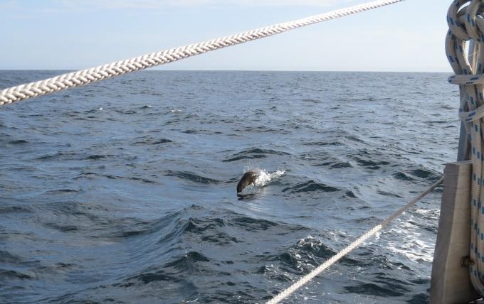 seal jumping